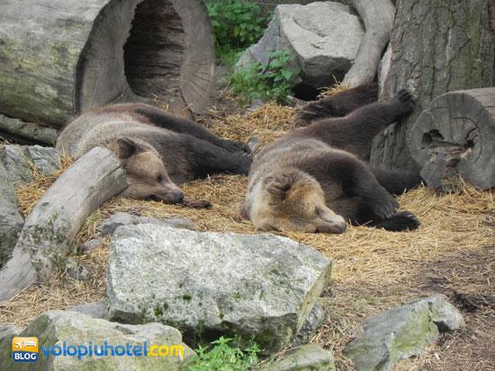 Gli orsi allo Skansen
