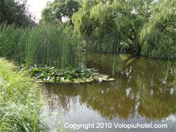 Laghetto con piante acquatiche