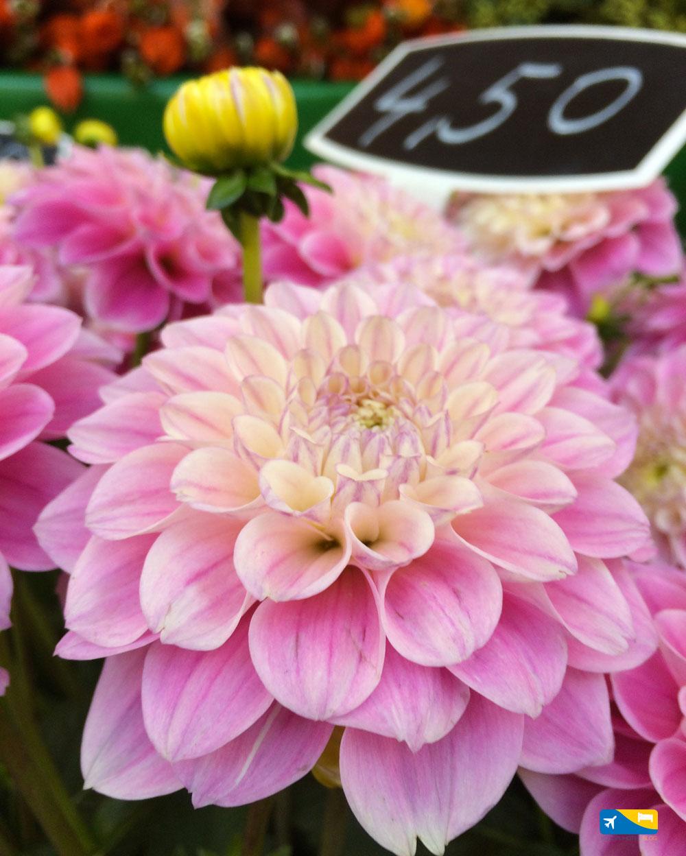 Flower Market a Utrecht
