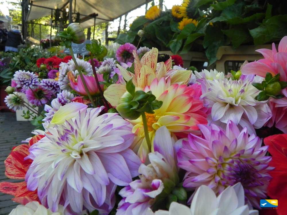 Fiori al mercato di Utrecht