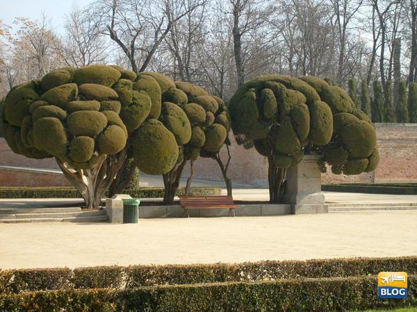 Curiosi alberi alle spalle del Prado