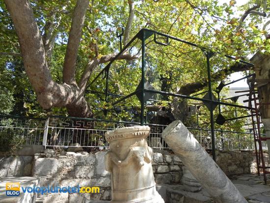 Il Platano di Ippocrate a Kos