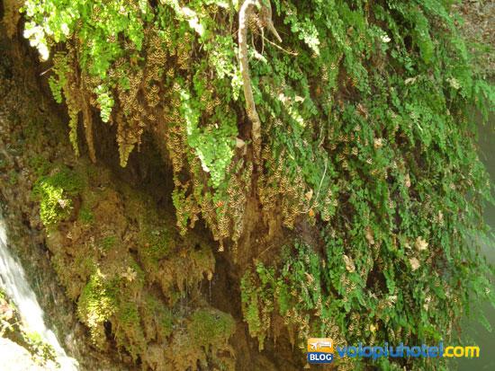 La Valle delle Fardalle a Petaloudes a Rodi