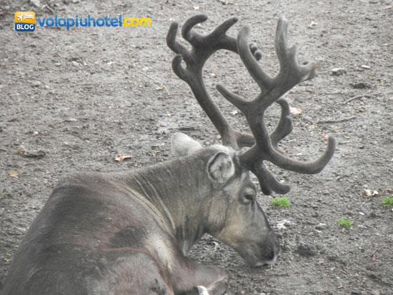 I 10 animali più belli da vedere allo Skansen di Stoccolma